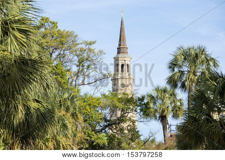 Palm trees with the steeple of St Philips Church in Charleston, South Carolina