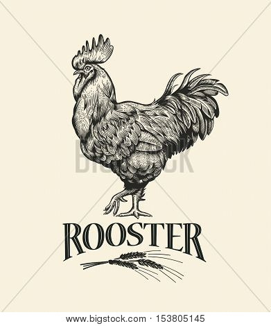 Rooster. Illustration of the in Vintage engraving style. Rooster grunge label. Sticker image for the farms and manufacturing depicting roster. Grunge label for chicken product.