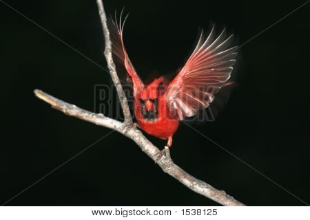 Red Bird At Night