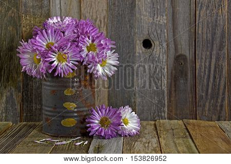 purple autumn mums in rusty tin can on weathered wood