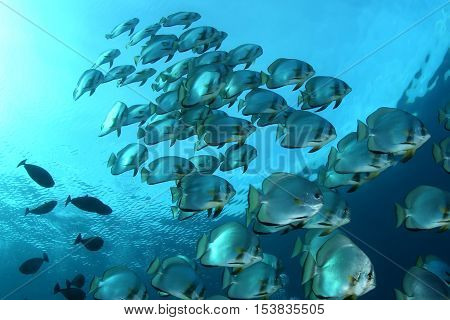 coral life seen diving Indonesia Sea pacific Ocean