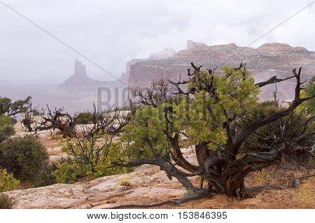 Fog mist and rain at Canyonlands National Park near Moab Utah