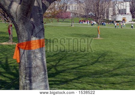 Virginia Tech Drillfield