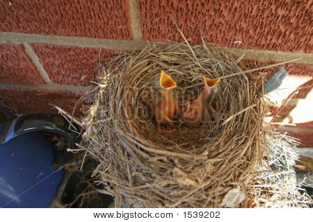 Ibird Nest