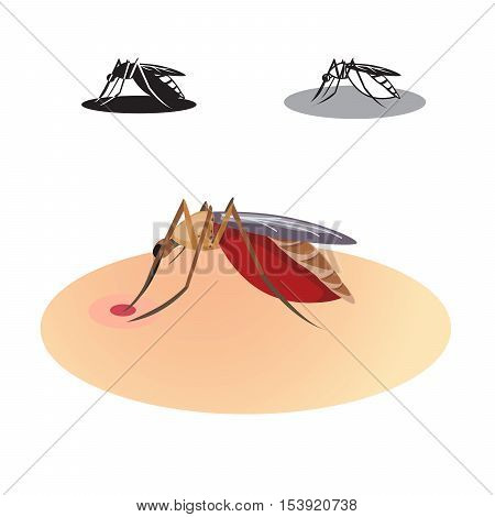 Vector of mosquitoes drink blood (colour & black and white).
