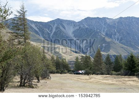 Pine Trees At Campsite In Glentanner Park Centre, Aoraki / Mount Cook National Park, Canterbury, New