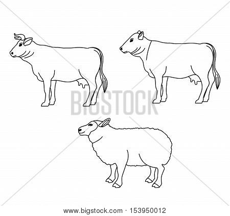 Lamb cow and beet icon. Livestock animal life nature and fauna theme. Isolated design. Vector illustration
