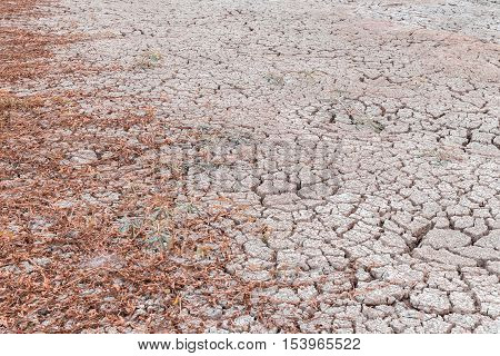 dry plant in arid area cracked soil try to growth selective focus