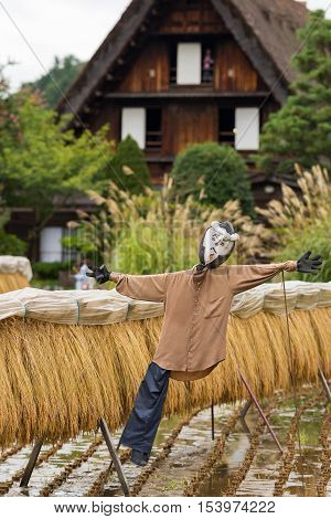 Shirakawago Japan - September 23 2016: Closeup of well designed and decorated scarecrow with drying rice stalks at Shirakawago. House with particular joined hands roof in the back.