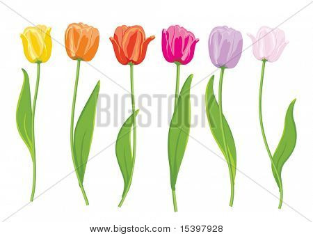 Farbe Tulpen. Vektor-illustration