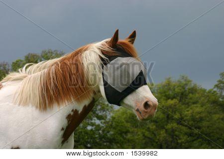 Masked Paint Horse