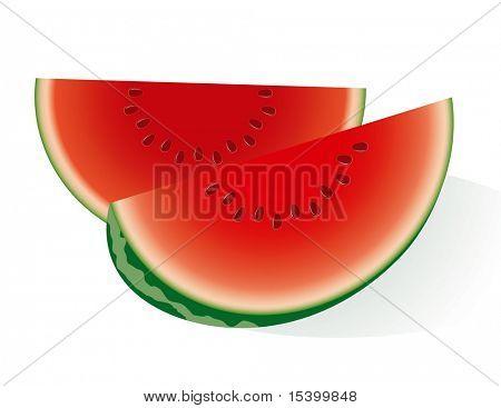 Wassermelone. Vector.