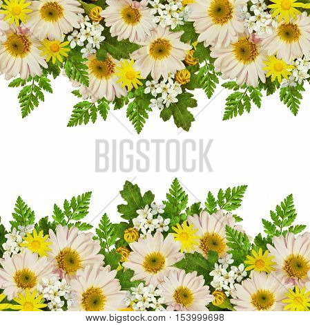Rose asters and wild flowers edges isolated on white