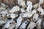 picture of curio  - A stack of cattle skulls for sale in a curio shop - JPG