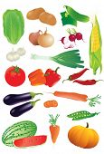 picture of batata  - Vector set of raw vegetables - JPG
