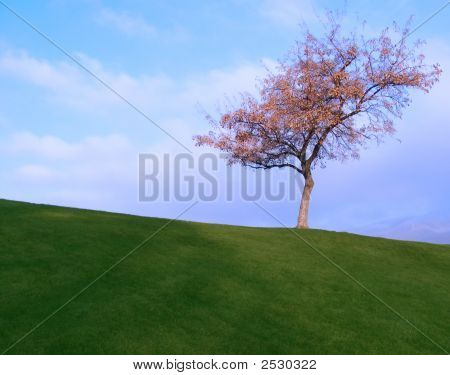 001 Lone Tree
