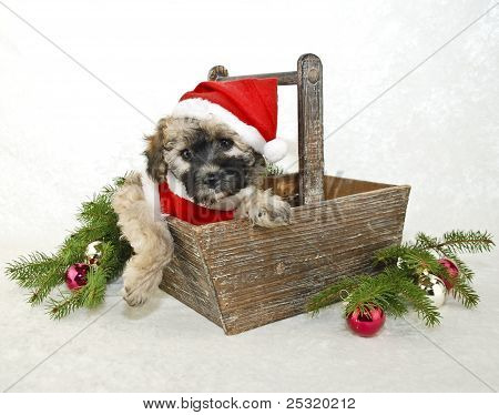Christmas Puppy In A Santa Suit.