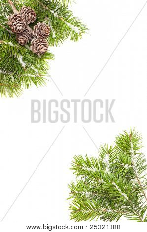 Pine branches and fir cone corners covered in snow on white background