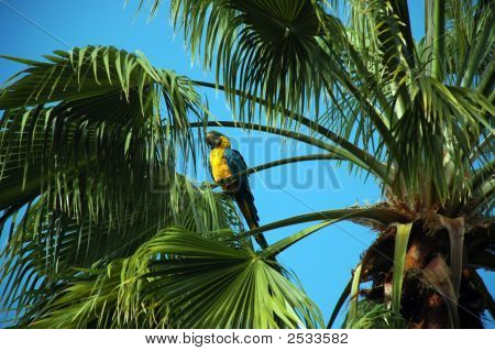 Parrot Perched On Top Of Palm Tree