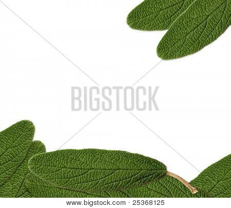 green leaves decorative border isolated on white background