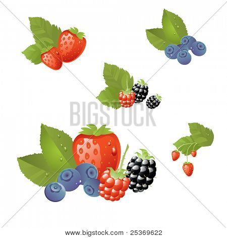 fresh berries vector illustration, isolated on white, grouped and layered for easy editing.