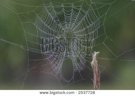 Spider Web Covered With Dew