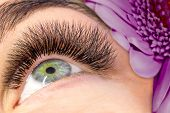 Eyelash Extension Procedure. Woman Eye With Long False Eyelashes. Close Up Macro Shot Of Fashion Eye poster