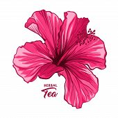 Hawaiian Hibiscus Fragrance Flower Or Mallow Pink Chenese Rose. Flora And Isolated Botany Plant With poster