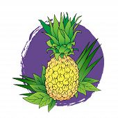 Vector Line Illustration Of Pineapple With Leaves On Purple Blot. Isolated Illustration Of Color Ana poster
