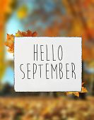 Hello September Autumn Text On White Plate Board Banner Fall Leaves Blur Background poster