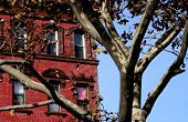 picture of brownstone  - The facade of New York brownstone in the fall - JPG
