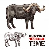 African Buffalo Animal Isolated Sketch Of Hunting Sport Open Season. Black Bull Of Cape Buffalo Or D poster