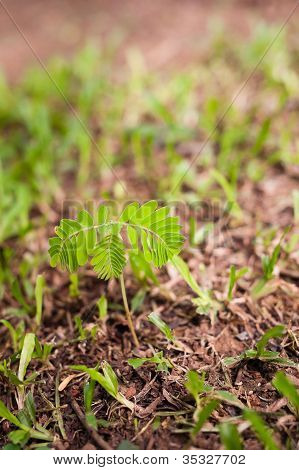 Plant Growing From Soil With Green Grass