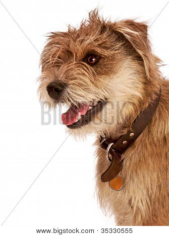 Cute Shaggy Dog With Happy Expression.