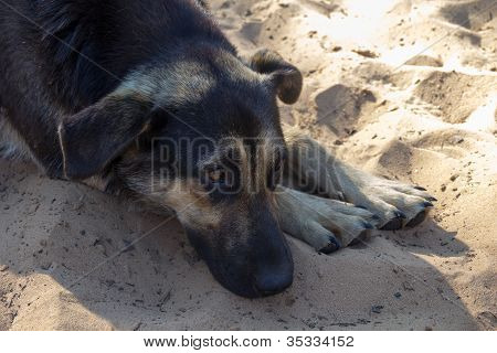 Sad Dog Lying On Sandy Deach