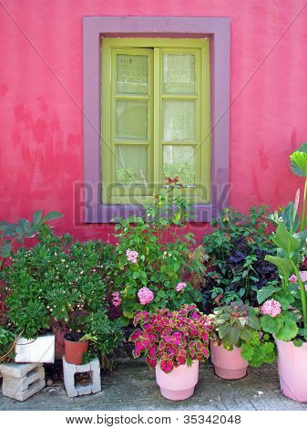 Flower pots under the window