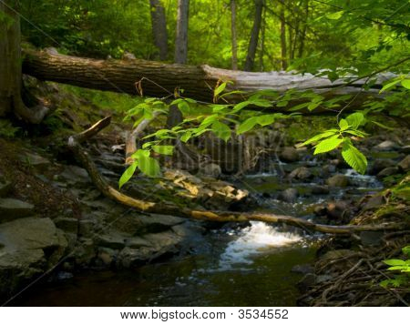 Leaves, Sunlight, And Stream