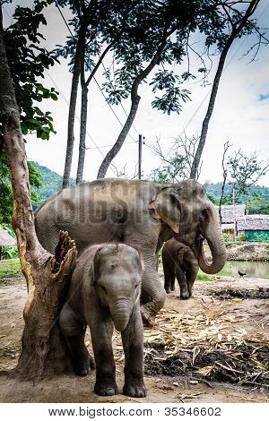 Elephant family group with mother and two babies