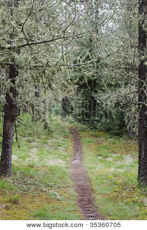 Path In Sunny Forest