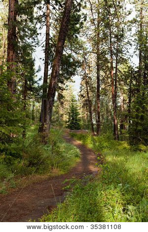 Peaceful Forest Path