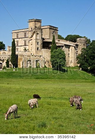 Horses at the Château