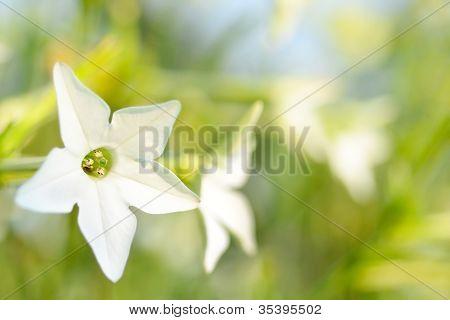 White Delicious Flowers in Garden