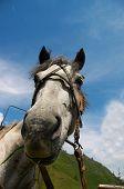 Horse Portrait-01 poster