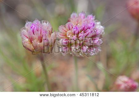 Flor de segunda mano