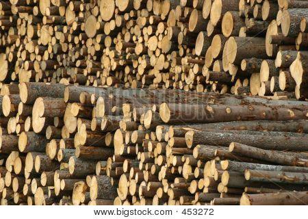 Holz-Protokolle
