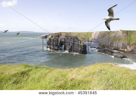 Virgin Rock Seagulls In An Updraught