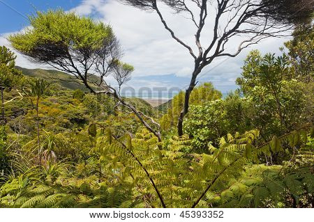 Coastal NZ ferntree forest wilderness near Piha