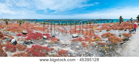 Beautiful panorama of Galapagos South Plaza island