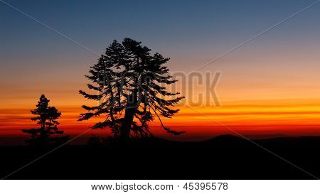 Tree Silhouetted Against Sunset