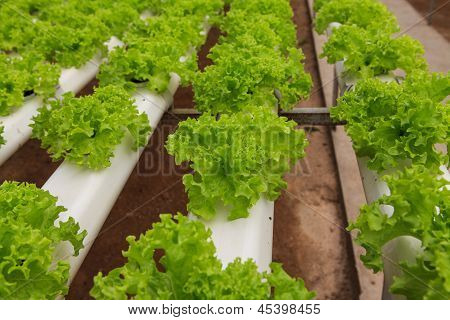 Vegetables Hydroponics Farm